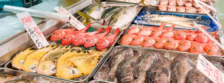 日野 魚類 角 場